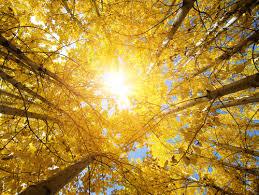 秋の日焼けの原因は⁇⁇