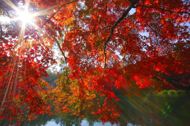 秋に気になる【シミ】を改善するスキンケア
