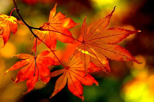 美容効果抜群♪秋の味覚♪