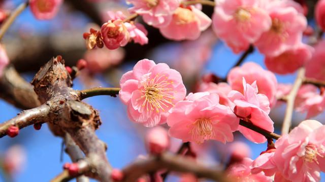 春に自律神経が乱れる理由