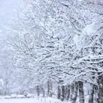 冬の朝が苦手なあなたには○○の習慣が必要