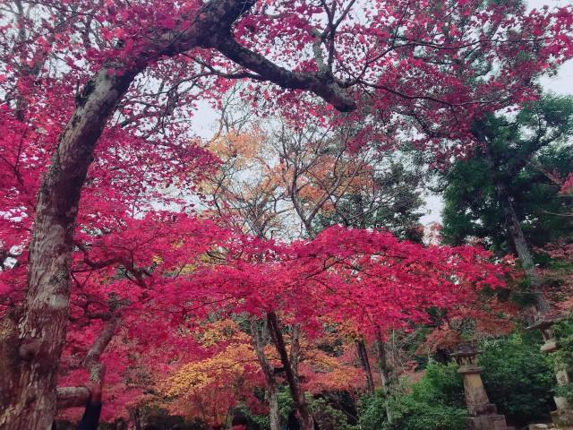 秋に悪化する【大人ニキビ】と【毛穴】にはコレ!