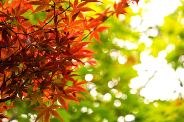 安佐南区と東広島のエステサロン~9月のおもてなし企画~