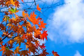 秋のごわつき、ざらつきの原因とは?