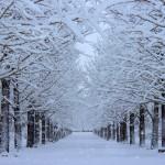 冬の肌乾燥と赤味が気になる方必見