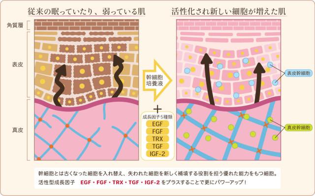 pic_02_skin_comparison